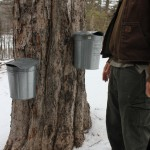 06. Drew with some of the many maple sap collectors